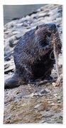 Beaver Sharpens Stick Beach Towel