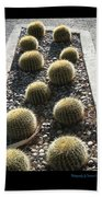 Bed Of Barrel Cacti  Beach Towel