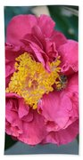 Bee And Wasp On Camellia Beach Towel
