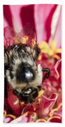Bee Close Up On Pinkish Red Flower Beach Towel