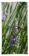 Bee In Lavender Beach Towel