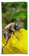 Bee Mimic On Primrose Beach Towel