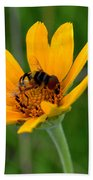 Bee On A Smooth Oxeye Beach Towel