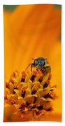 Bee On Cosmo Beach Towel