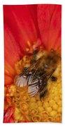 Bee On Dahlia - 2 Beach Towel