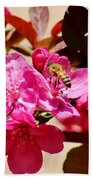 Bee On Pink Blossoms 031015aa Beach Towel