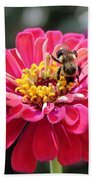Bee On Pink Flower Beach Towel