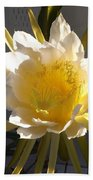 Bee Pollinating Dragon Fruit Blossom Beach Towel