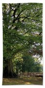Beech Tree Britain Beach Towel