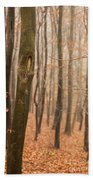 Beech Wood In Autumn Beach Towel