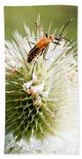 Beetle On White Spiky Wild Flower Beach Towel