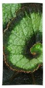 Begonia Leaf 2 Beach Towel
