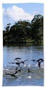 Belconnen Lake Beach Sheet