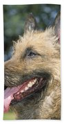 Belgian Laekenois Dog Beach Towel