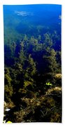 Below The Surface Beach Towel