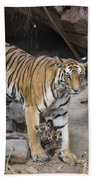 Bengal Tiger And Cubs Bandhavgarh Np Beach Towel