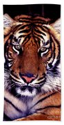 Bengal Tiger Eye To Eye Beach Towel