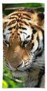 Bengal Tiger Portrait Beach Towel