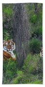 Bengal Tigers On Grassy Hillside Endangered Species Wildlife Rescue Beach Towel