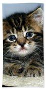 Benny The Kitten Resting Beach Towel
