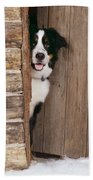 Bernese Mountain Dog At Log Cabin Door Beach Towel