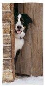 Bernese Mountain Dog At Log Cabin Door Beach Sheet