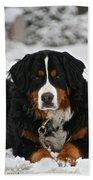 Bernese Mountain Dog Beach Towel