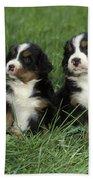 Bernese Mountain Puppies Beach Towel