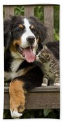 Bernese Mountain Puppy & Kitten Beach Towel