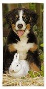 Bernese Mountain Puppy And Rabbit Beach Towel