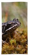 Beutiful Frog On The Moss Beach Towel