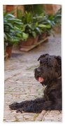 Big Black Schnauzer Dog In Italy Beach Towel