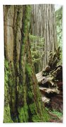 Big California Redwood Tree Forest Art Prints Beach Towel