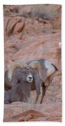 Big Horn Group Pose Beach Towel