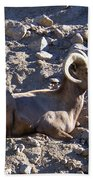 Big Horn Sheep Close Up Beach Towel