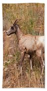 Big Horn Sheep Ewe Beach Towel