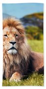 Big Lion Lying On Savannah Grass Beach Towel