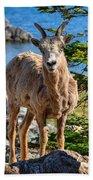 Bighorn Sheep Of Lake Minnewanka Beach Towel