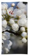 Billows Of Fluffy White Bradford Pear Blossoms Beach Towel