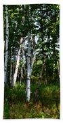 Birch Grove In The Sunlight Beach Towel