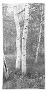 Birch Trees In A Forest, Acadia Beach Towel