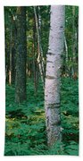 Birch Trees In A Forest Beach Towel