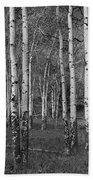 Birch Trees No.0148 Beach Towel