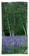 Birches In The Blue Lupine Beach Towel