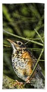 Bird - Baby Robin Beach Towel by Paul Ward
