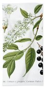Bird Cherry Cerasus Padus Or Prunus Padus Beach Towel