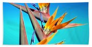 Bird Of Paradise 2013 Beach Towel