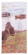 Bird Wildlife Beach Towel