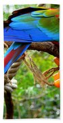 Birds Eye Beach Towel