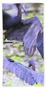 Birds - Fighting - Herons Beach Towel